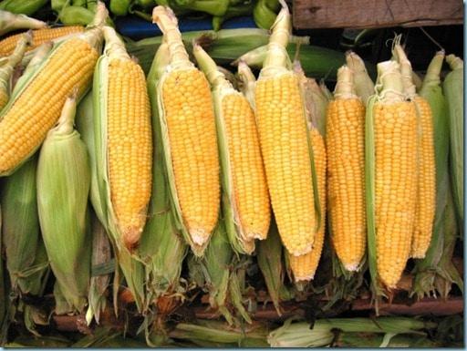 sweet corn (550x413)