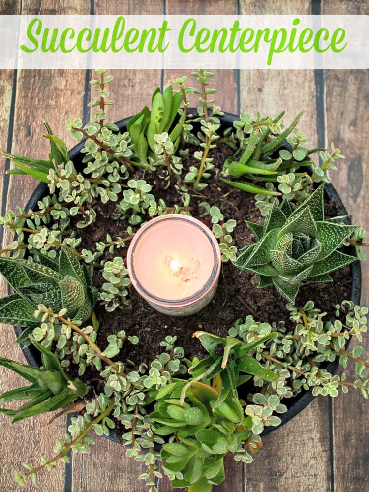 Succulent Centerpiece - a wreath of succulents surrounding a candle