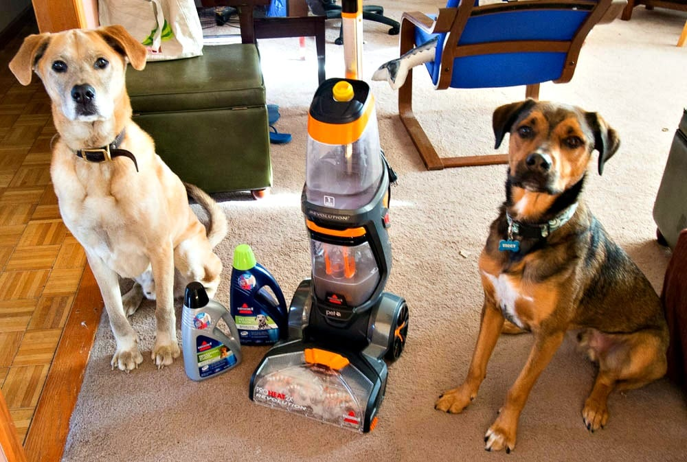 My holiday cleaning challenges - My two dogs