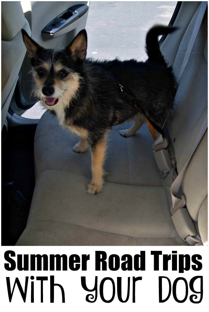 Tips for Successful Summer Road Trips with Your Dog - Learn how to make your travel with your dog less stressful