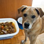 Easy Beef Stew Recipe & Dodger's Adoption Story