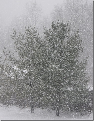 Wordless Wednesday–Still Snowing