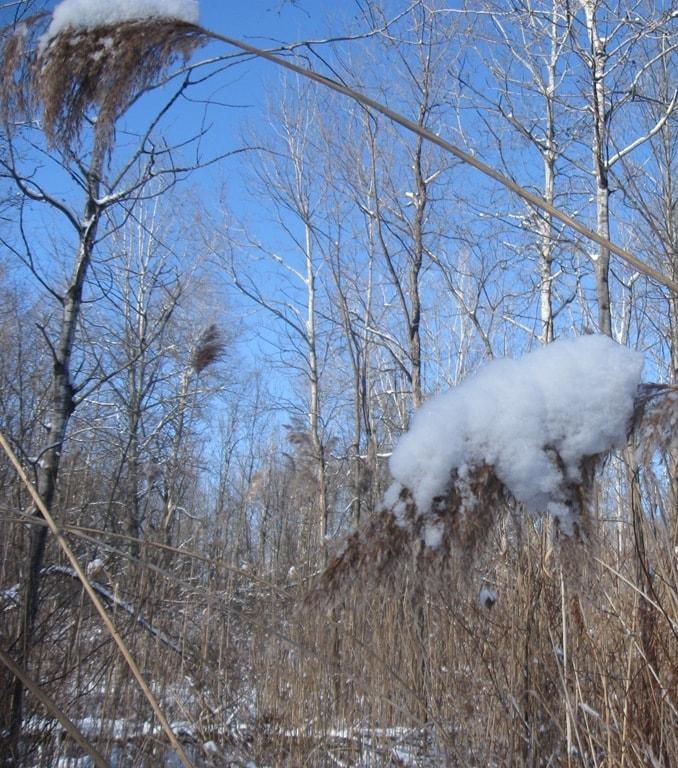 Wordless Wednesday – Snowy Day