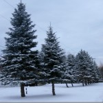 Wordless Wednesday–First Snowfall