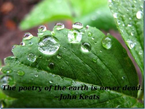 The poetry of the earth is never dead - John Keats