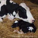 Wordless Wednesday–Dairy Farm