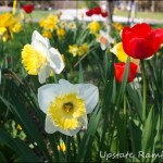 Wordless Wednesday – Spring Bulbs
