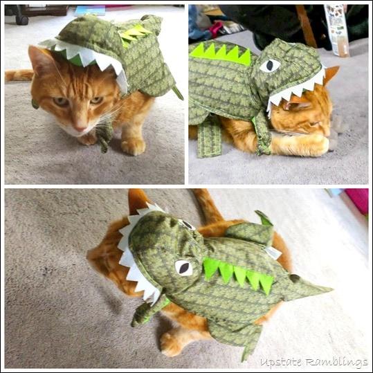 Knit Cat Hat Dinosaur Halloween Costum
