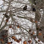 Wordless Wednesday – Winter Apple Trees