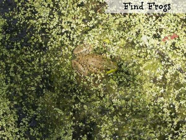 Summertime fun - frogs #shop