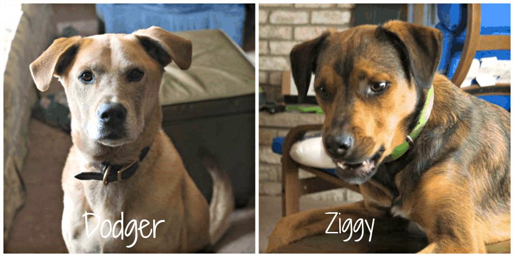 Dodger and Ziggy #PedigreeGives #cbias #shop
