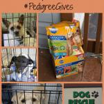 Pet Adoption Month – Adopt a Dog