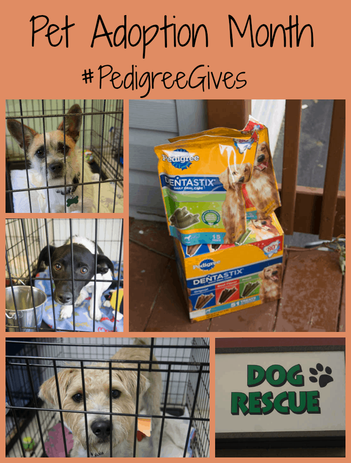 Pet Adoption Month #PedigreeGives #cbias #shop