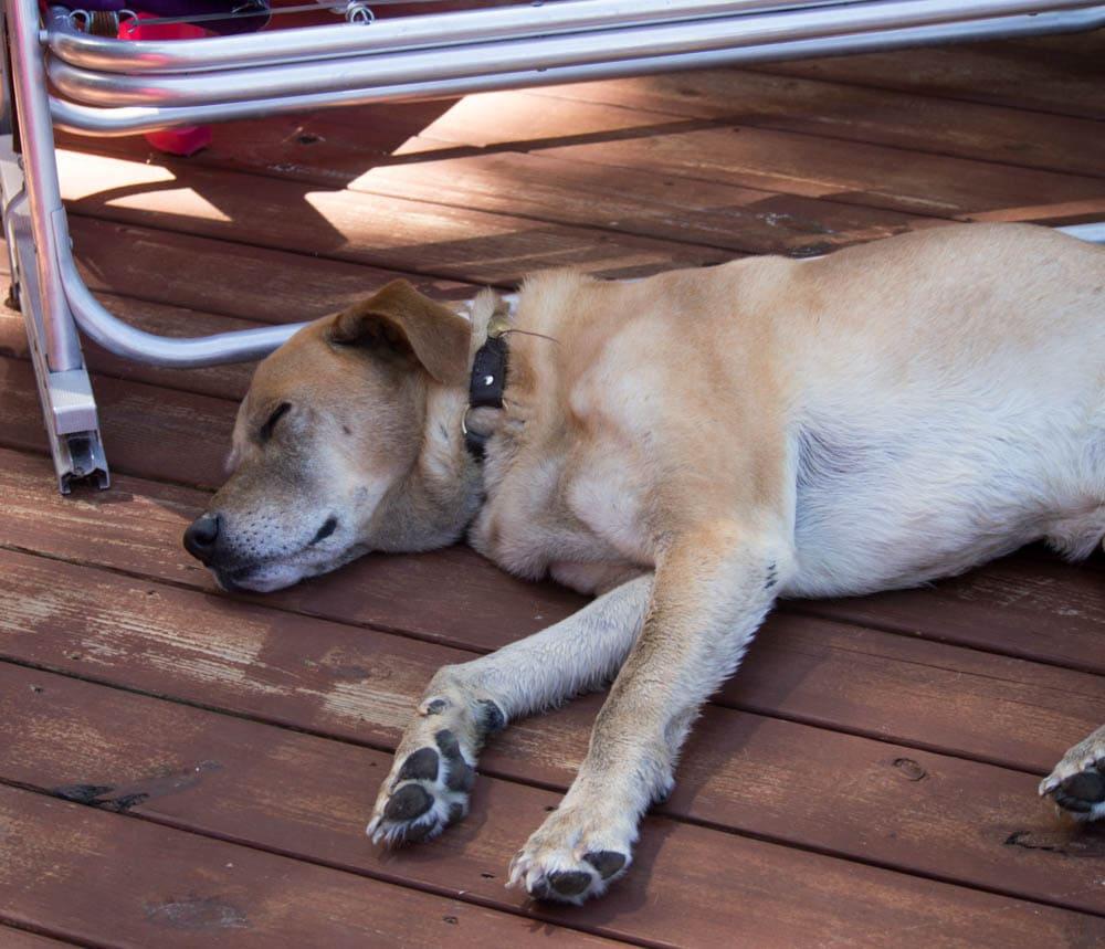 Dodger Sleeping